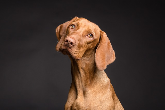 Big Dogs thrive on CBD and Hemp Oil Extract from Hemp Oil Rockstar